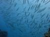 fish-shoal-thailand
