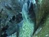 moray-eel-thailand